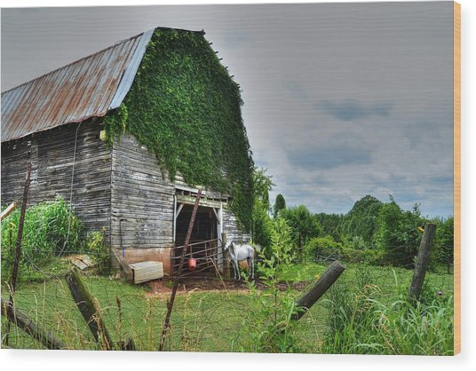 Country Girls Dream Wood Print