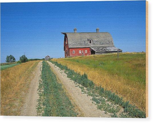 Country Road In Saskatchewan Wood Print by Buddy Mays