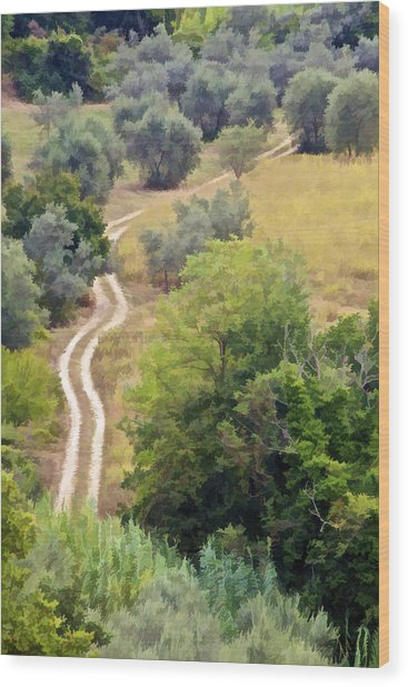 Country Road Of Tuscany Wood Print