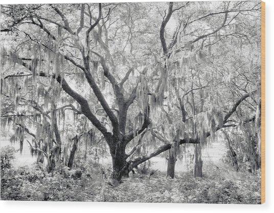 County Road 39 Wood Print