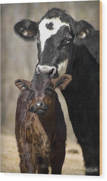 Cow And Calf Wood Print by Elizabeth Vieira
