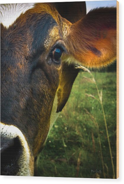Cow Eating Grass Wood Print