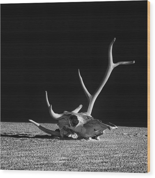 Cow Skull And Antlers Wood Print