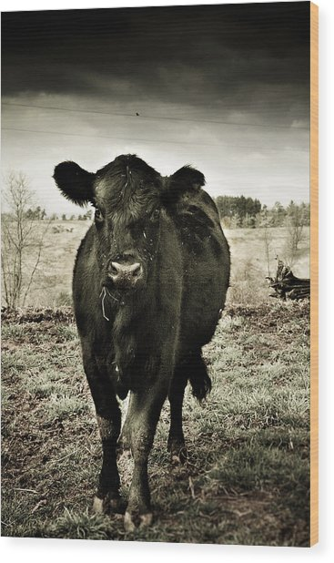 Cow In The Winter Pasture  Wood Print
