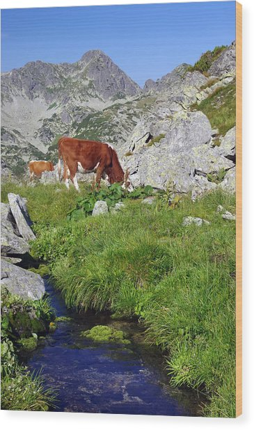 Cow On Alpine Pasture  Wood Print by Ioan Panaite