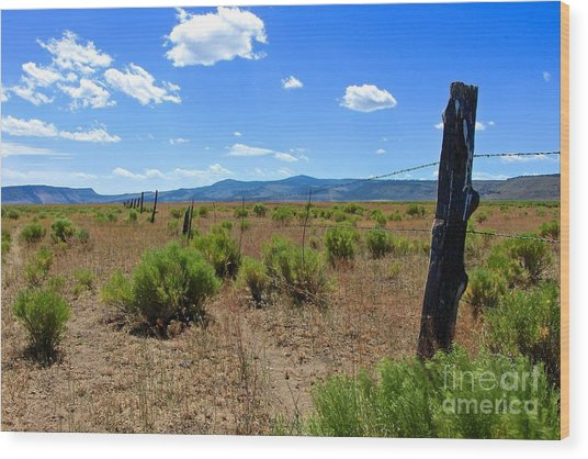 Cowboy Country Wood Print by Tim Rice