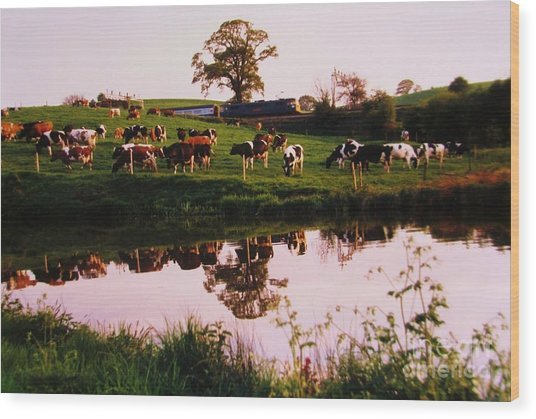 Cows In The Canal Wood Print