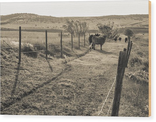 Cows In The Lane Wood Print