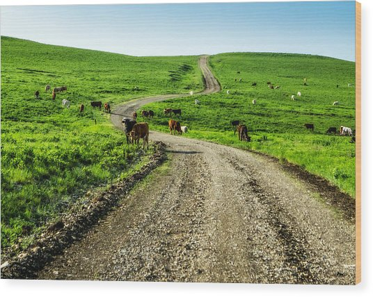 Cows On The Road Wood Print