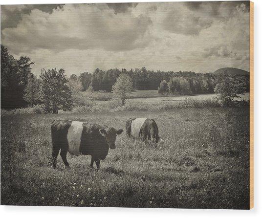 Cows Rockport Maine Wood Print