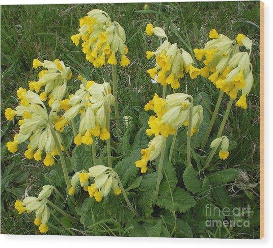 Cowslips Wildflowers. Wood Print by Ann Fellows