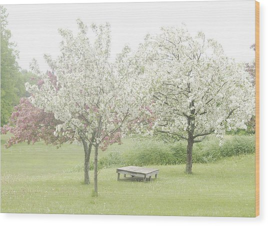 Crab Apple Blossoms Wood Print by Susan Crossman Buscho