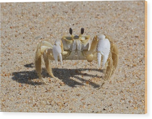 Crab On Sand Wood Print by David Wells / Eyeem