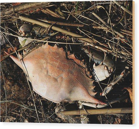 Crab Shell Wood Print