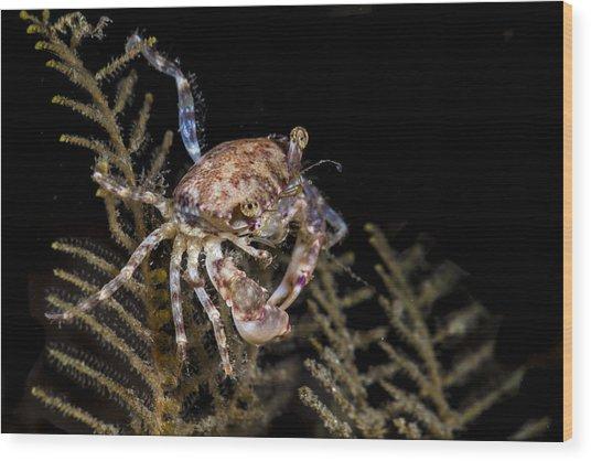 Crab Sitting At Night Wood Print