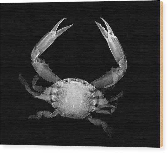 Crab Wood Print by William A Conklin