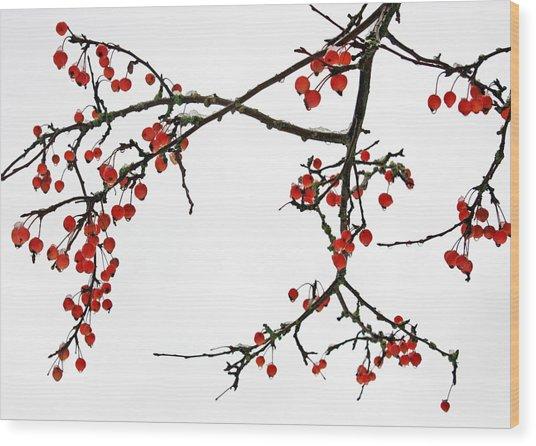 Crabapples II Wood Print