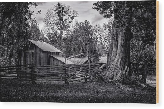 Cracker Barn And Gnarled Southern Red Cedar Wood Print