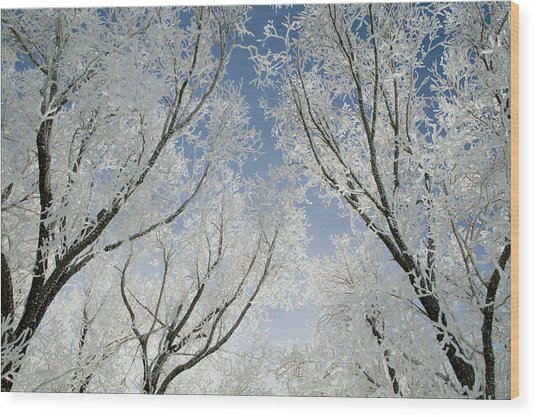 Crackling Cold Wood Print by Steve Smith