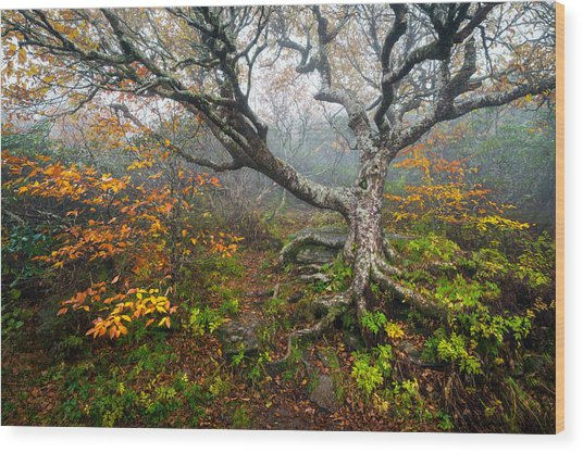 Craggy Gardens North Carolina Blue Ridge Parkway Autumn Nc Wood Print
