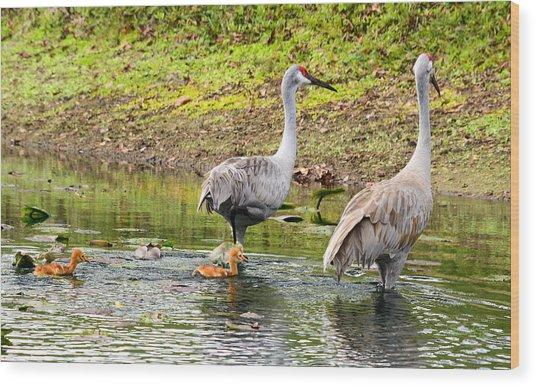 Crane Family Swim II Wood Print