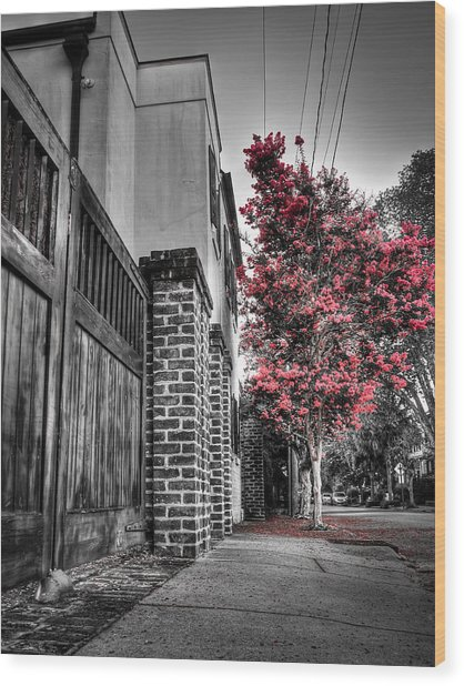 Crape Myrtles In Historic Downtown Charleston 2 Wood Print