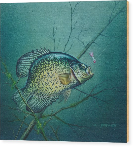 Crappie And Pink Jig Wood Print