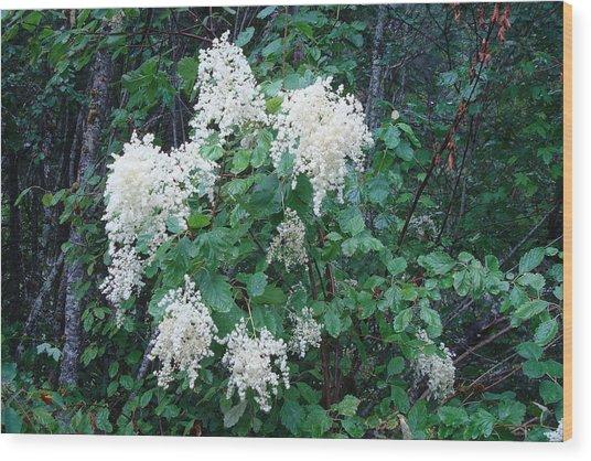 Creambush Oceanspray Wood Print