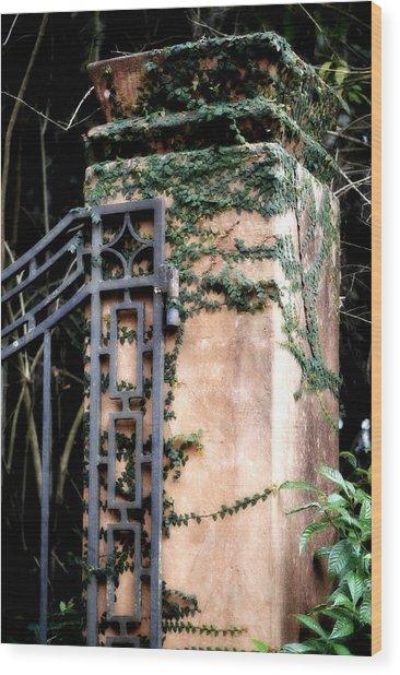Creeping Fig Wood Print by Tara Miller