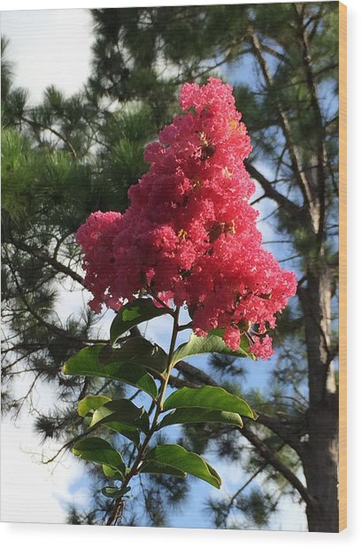 Crepe Myrtle And Mr. Pine Wood Print