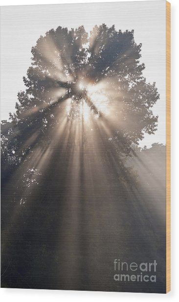 Crepuscular Rays Coming Through Tree In Fog At Sunrise Wood Print