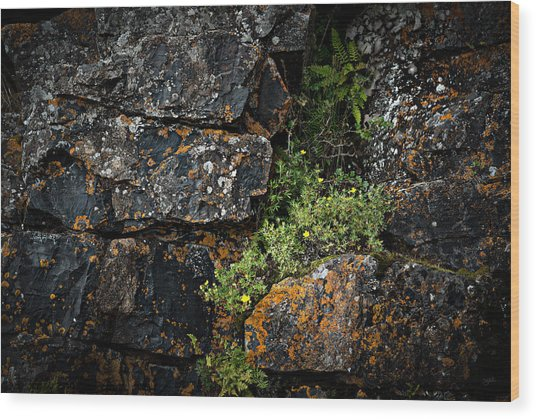 Wood Print featuring the photograph Crevice  by Doug Gibbons