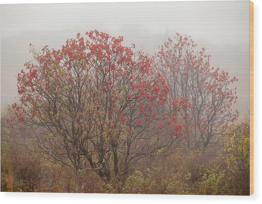Crimson Fog Wood Print