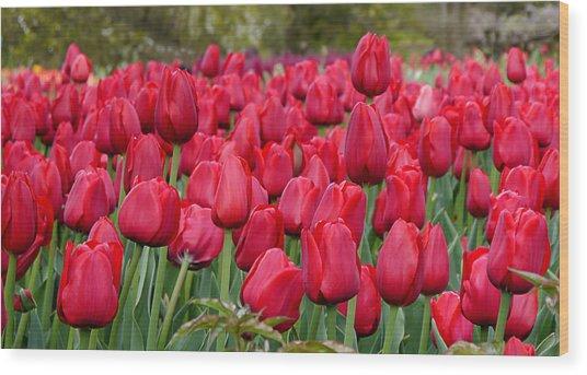 Crimson Tulips  Wood Print