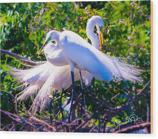 Criss-cross Egrets Wood Print