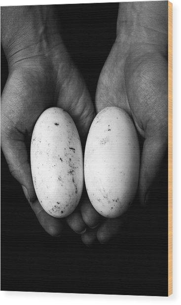 Crocodile Eggs Wood Print by Kim Lagerhem
