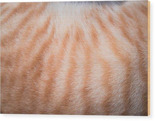 Cropped Image Of Cat Hair Wood Print by Ekachai Chobphot / EyeEm