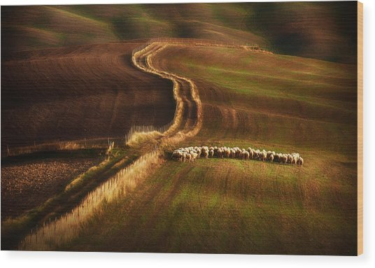 Crossing The Fields Wood Print by