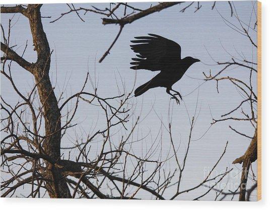 Crow In Flight Wood Print