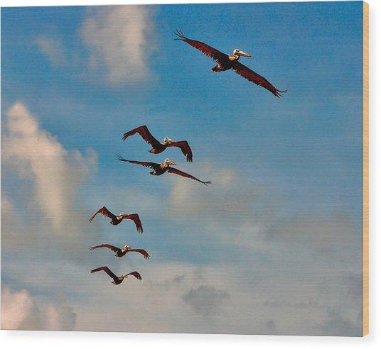 Cruising Pelicans. Melbourne Shores. Wood Print