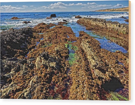 Crystal Cove Tide Pools  Wood Print by Donna Pagakis