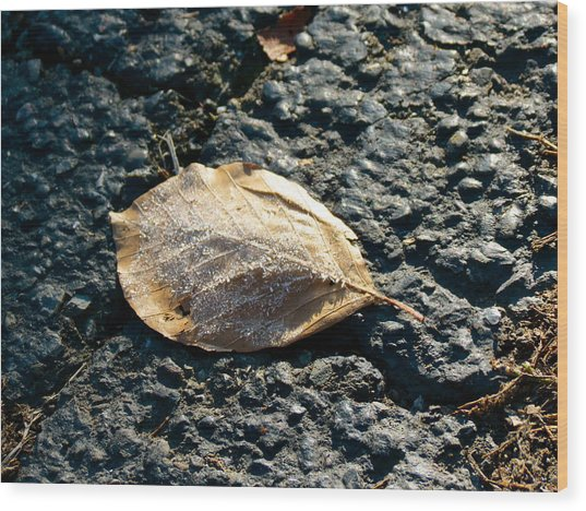 Crystal Leaf Wood Print by Azthet Photography