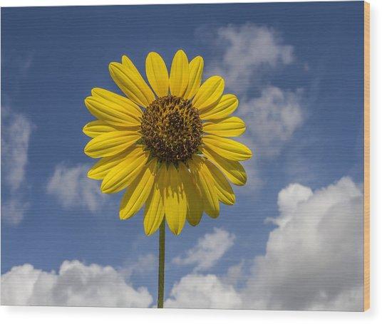 Cucumberleaf Sunflower Wood Print