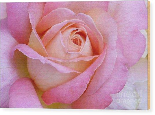 Cupid's Choice Rose Wood Print