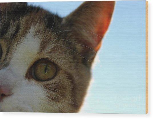 Curious Cat Wood Print