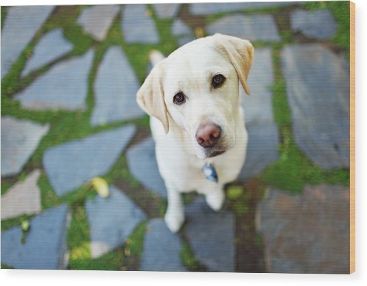 Curious Dog Looking Up Wood Print
