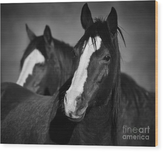 Curious Horses Wood Print