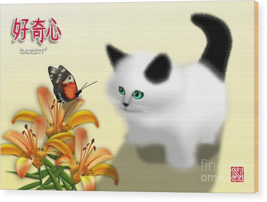 Curious Kitty And Butterfly Wood Print