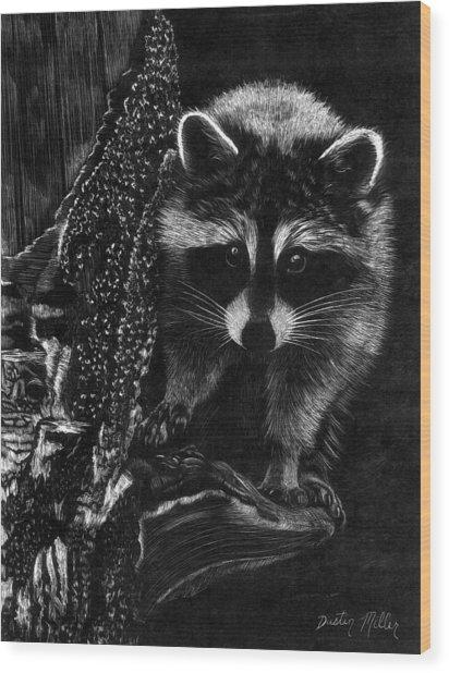 Curious Raccoon Wood Print