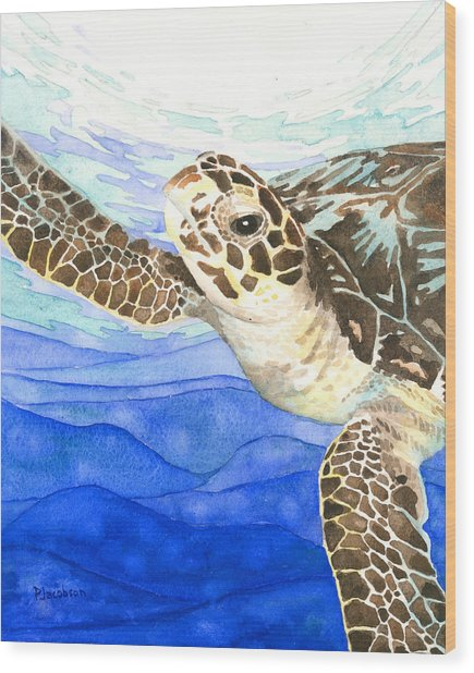 Curious Sea Turtle Wood Print